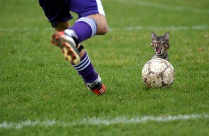 Кот с мячом Мостбет